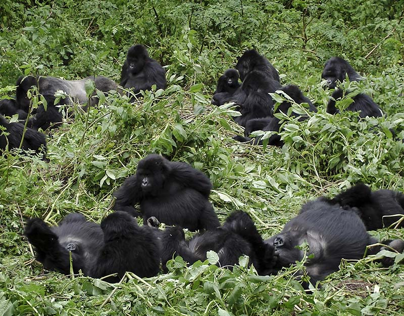 Bwindi National Park - Gorilla Tracking 2